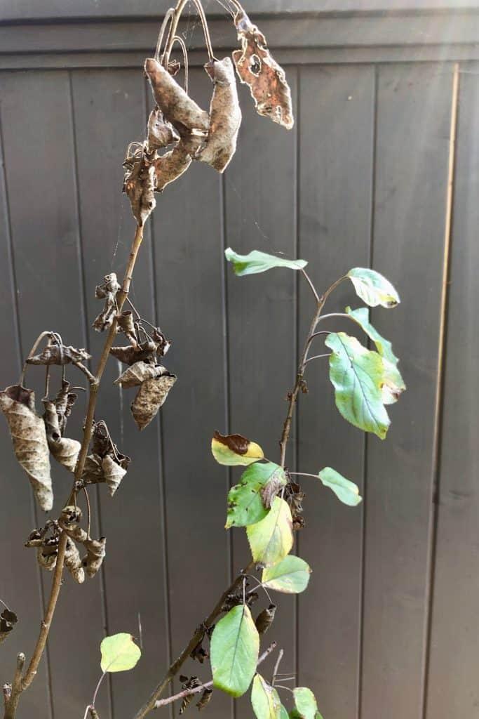Dead Tree Branch in Fall