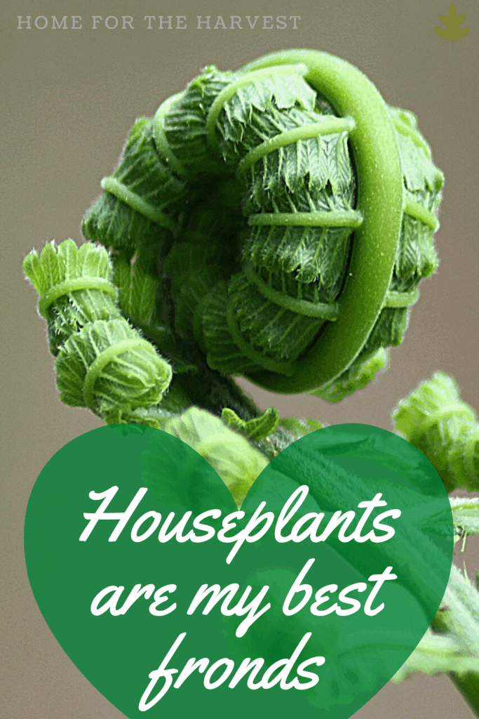 Houseplants are my best fronds