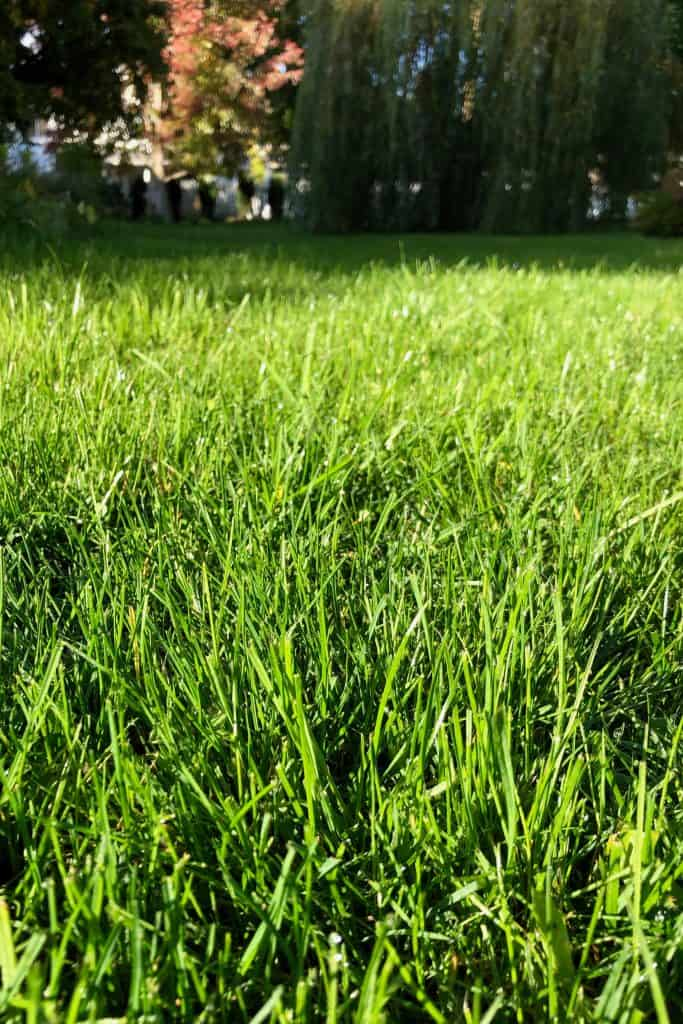How cold is too cold for grass to grow