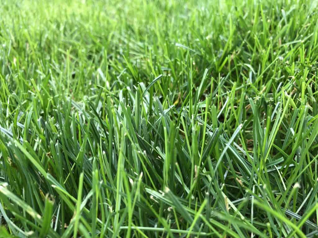 How to Choose Apply The Best Organic Lawn Fertilizer - Lush Green Grass Turf Lawn - Blades of Grass