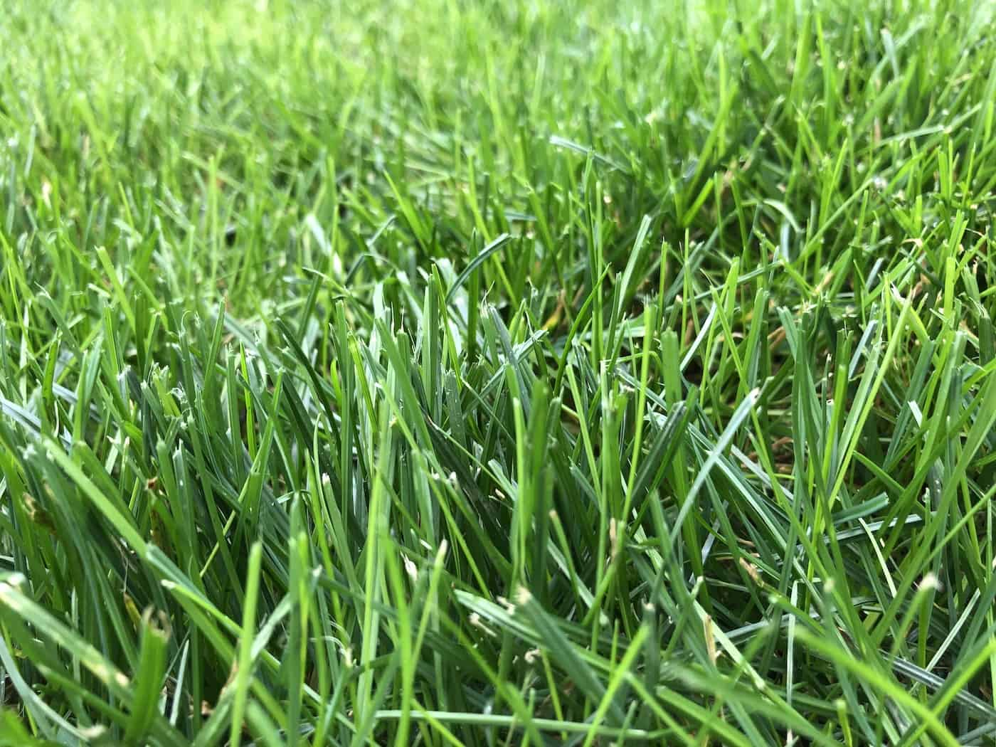 Organic Lawn Fertilizer A Homeowner S Guide To Natural Lawn Grass Food