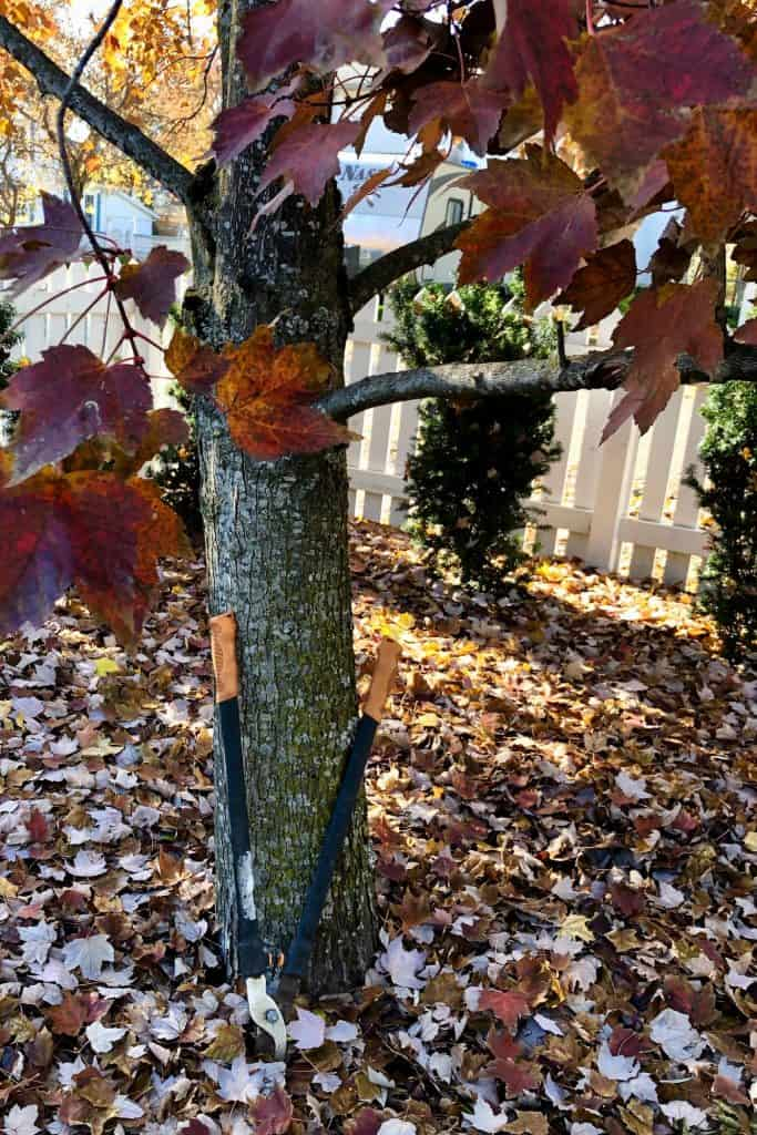 Pruning Trees in the Fall Should Be Avoided