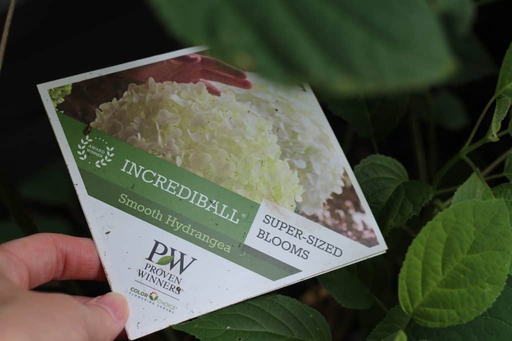 Tag of Proven Winners Incrediball Hydrangea
