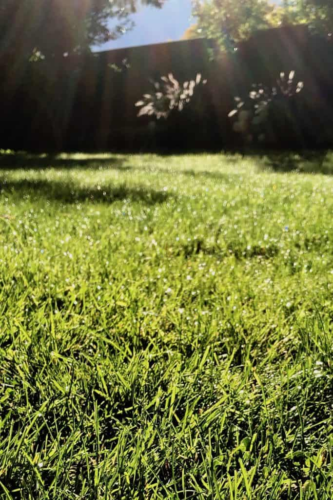 The Best Organic Lawn Fertilizers that are Safe for Kids and Pets
