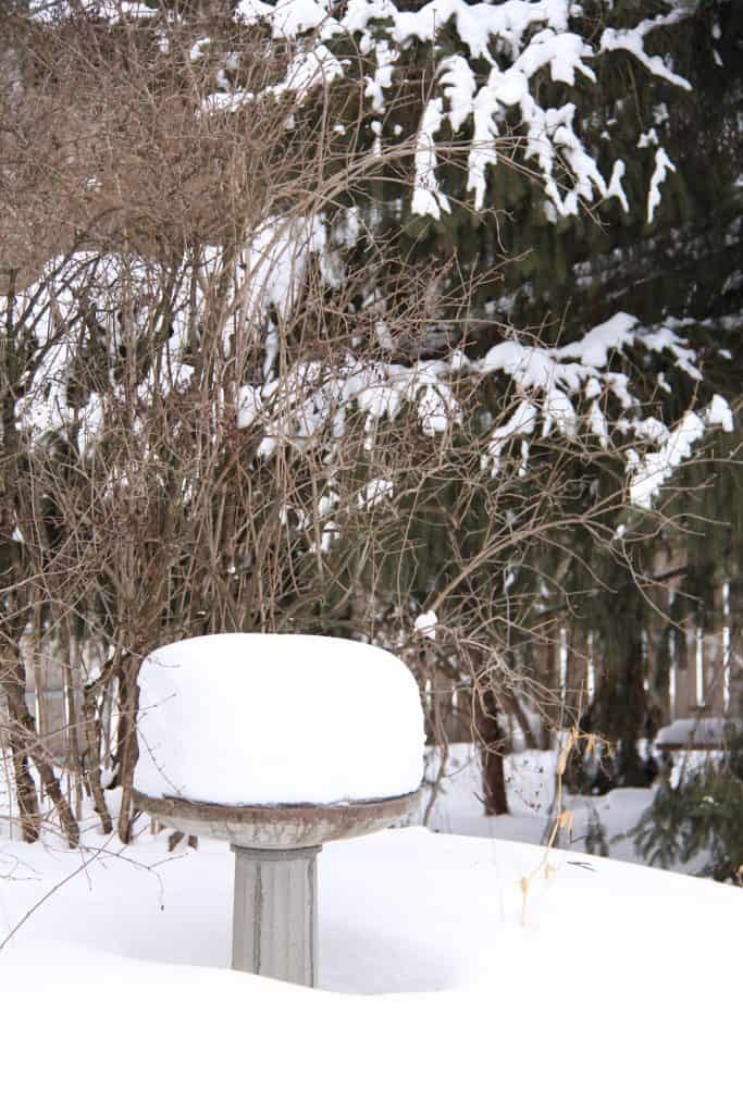Too Much Snow for Winter Pruning
