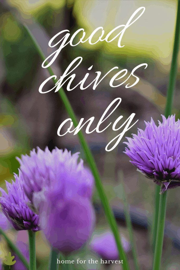 good chives only