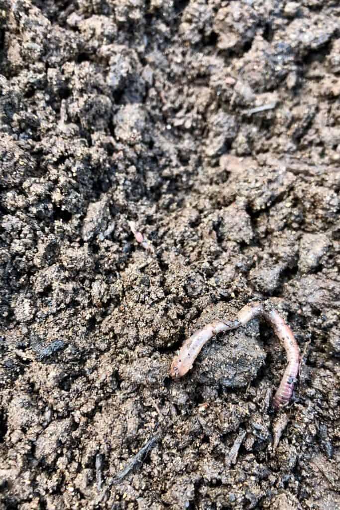 Earthworm on Soil