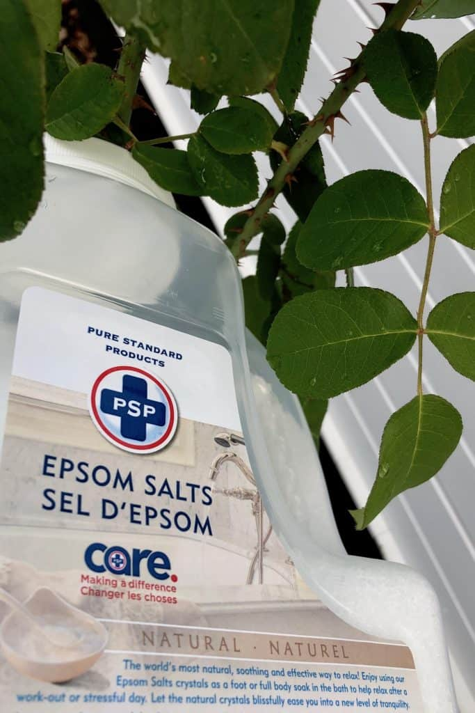Epsom Salt Fertilizer for Rose Plants