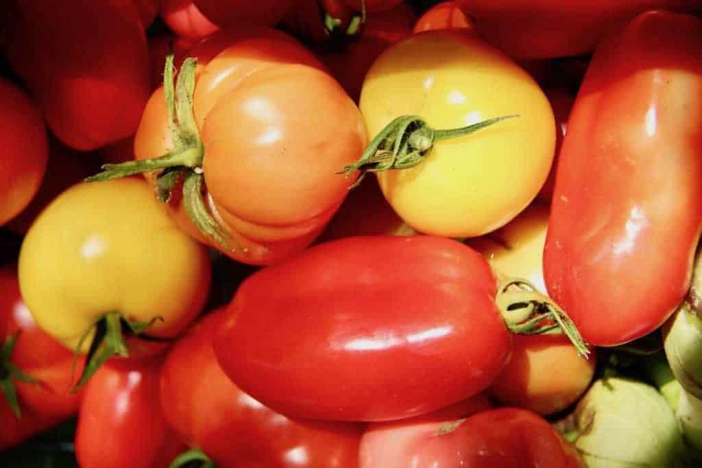 Harvesting Homegrown Heirloom Tomatoes