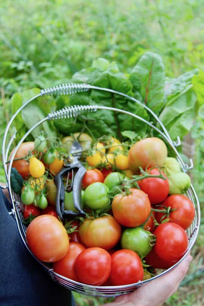 Taste Test Winning Tomatoes