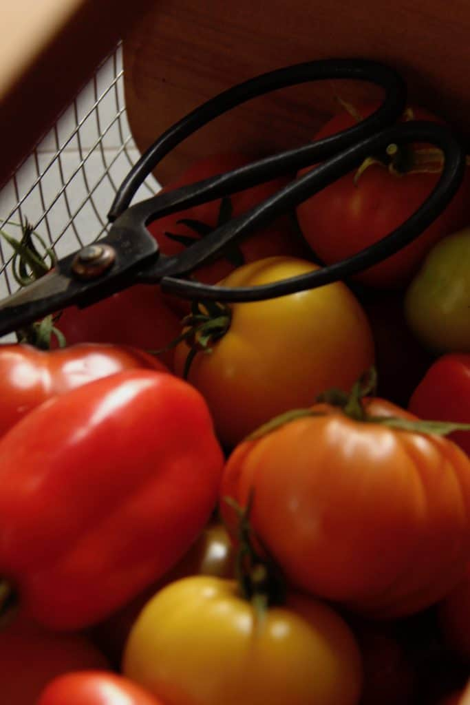 The Best Tasting Tomato Varieties