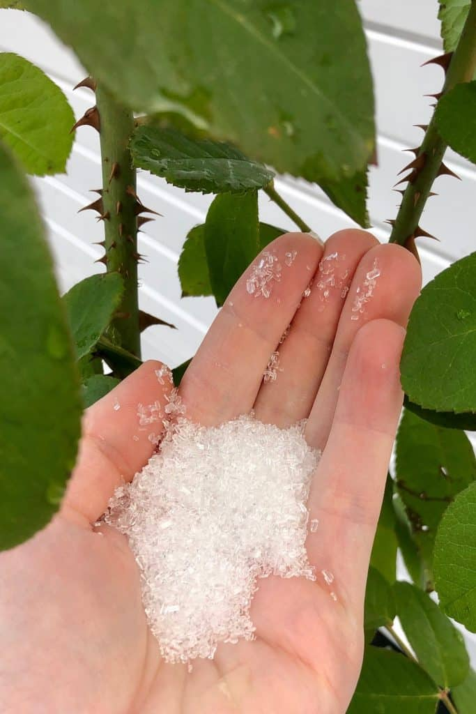 Using Epsom Salt as an Organic Plant Fertilizer