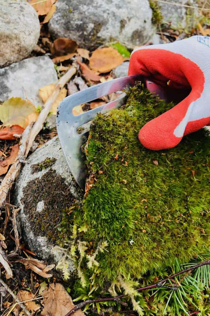 Where To Find Moss And Tips For Collecting It