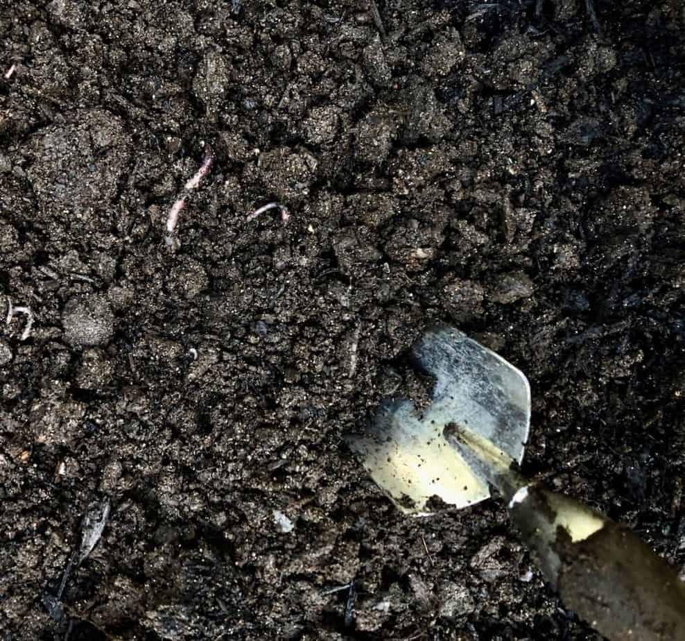 The Best Garden Soil