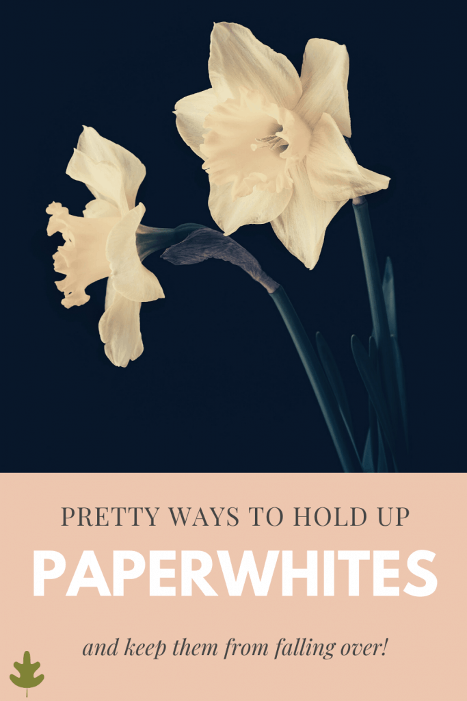 pretty ways to hold up paperwhites and keep them from falling over
