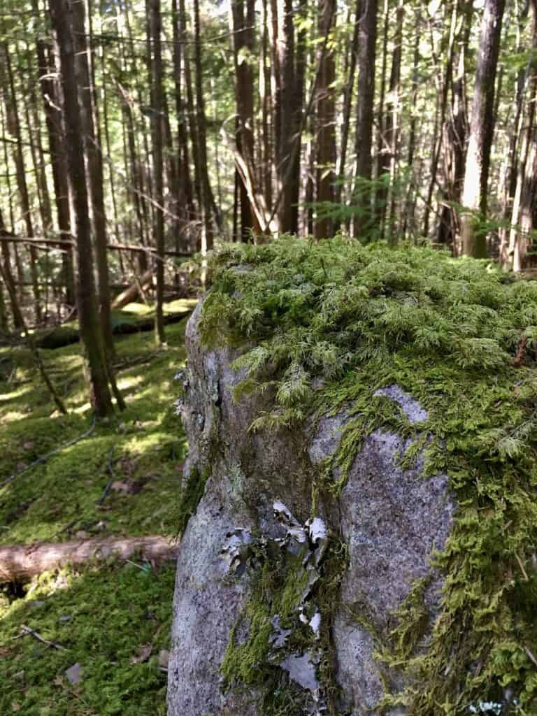 Large Stone Covered in Green Moss in Mossy Forest Shade