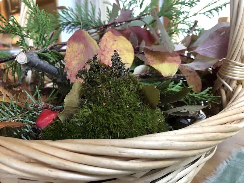 Moss in Basket