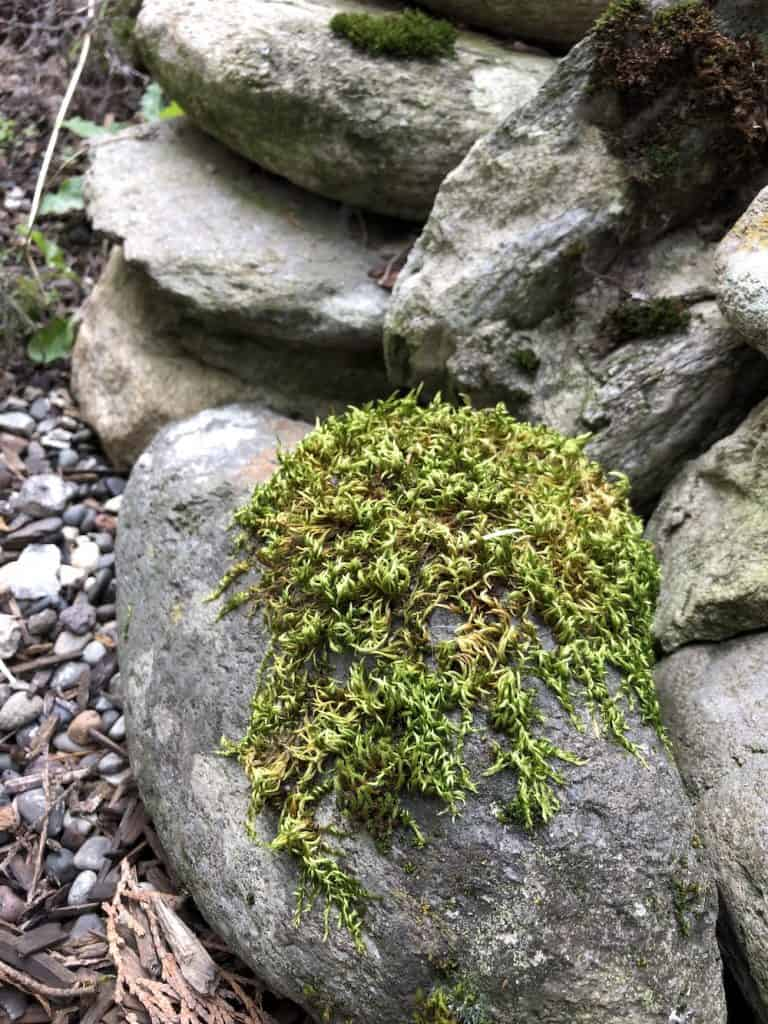 Moss on a Stone