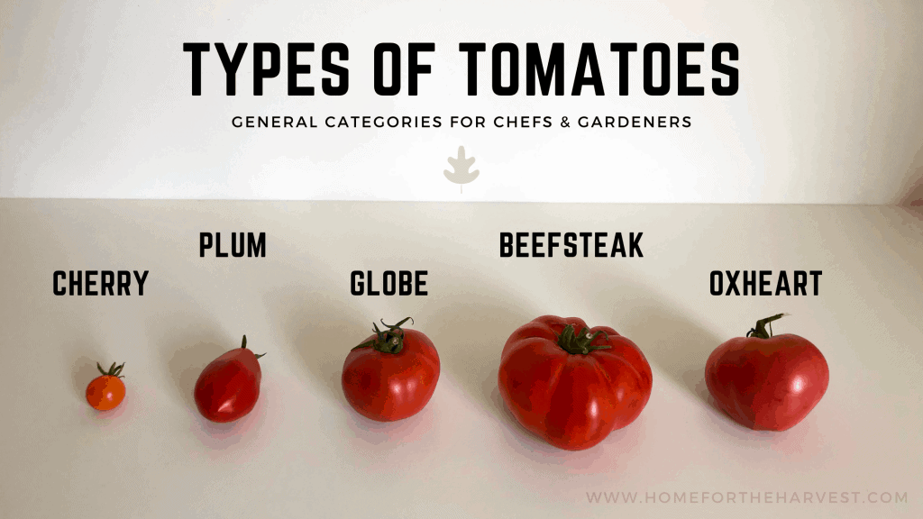 Types of Tomatoes - Labeled Photo of General Category Examples