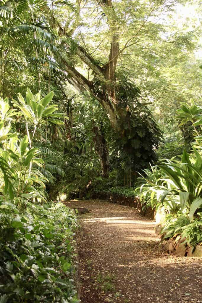 Under the canopy in a tropical rainforest - light is bright but indirect