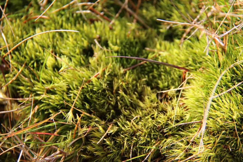 Where to Buy Live Moss