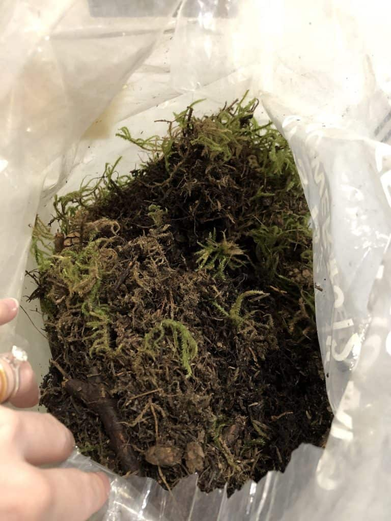 Where to Buy Live Moss - in Bulk or in Small Pieces