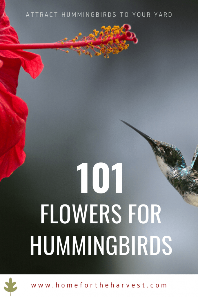101 Flowers for Hummingbirds