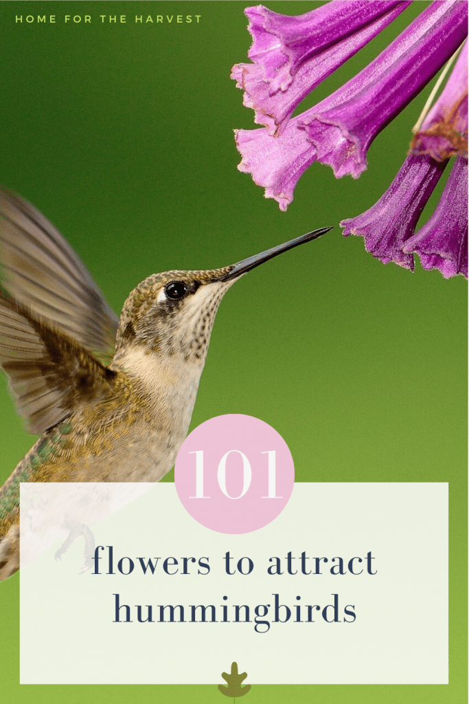 101 flowers to attract hummingbirds to your yard