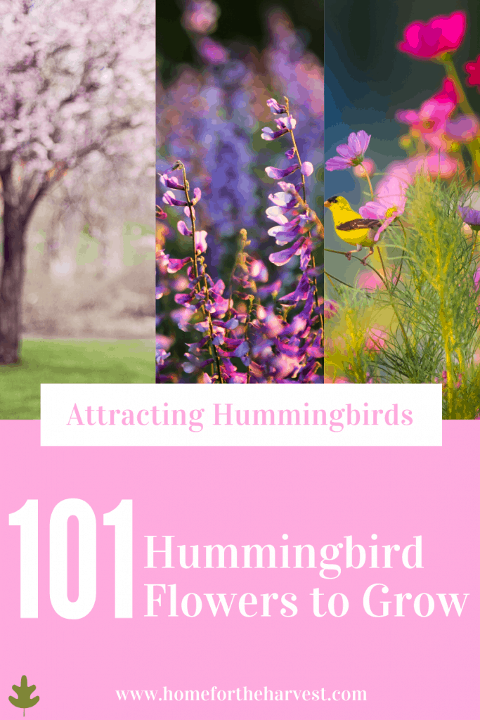 Attracting Hummingbirds with Flowers - What to Grow
