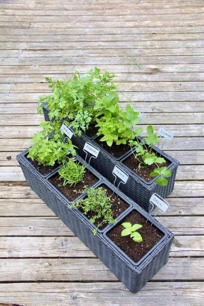 Herb container garden with individual insert pots