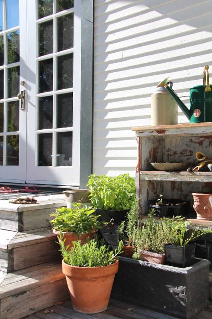 Herbs in various pots on a residential deck with watering can and french doors