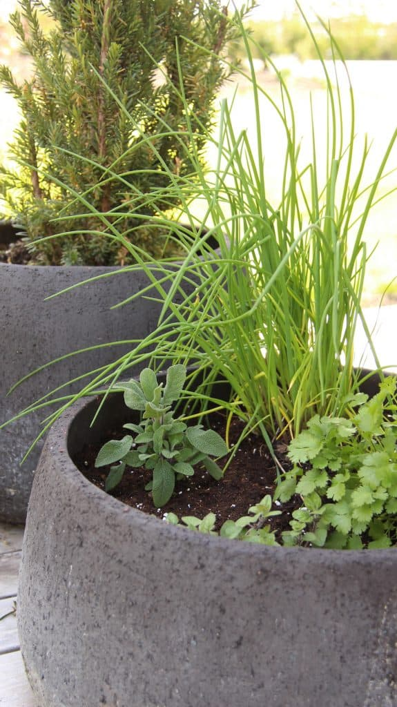Large Grey Concrete Fiber Herb Planter on Patio