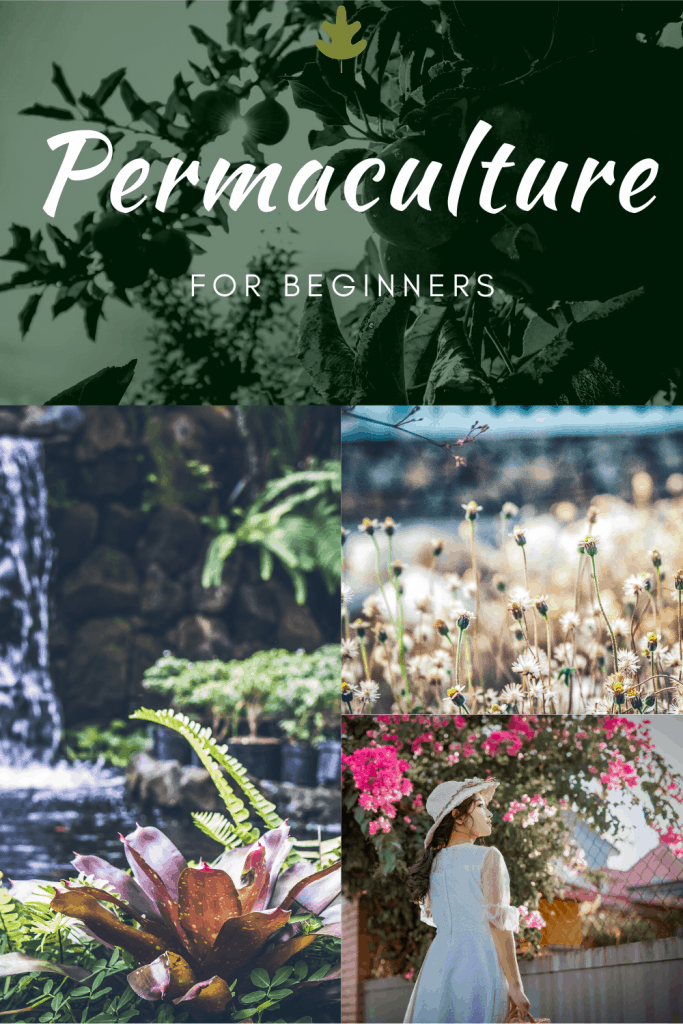 Permaculture for Beginners - An Introduction for Gardeners and Plant Lovers