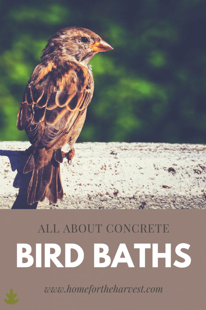 concrete bird baths