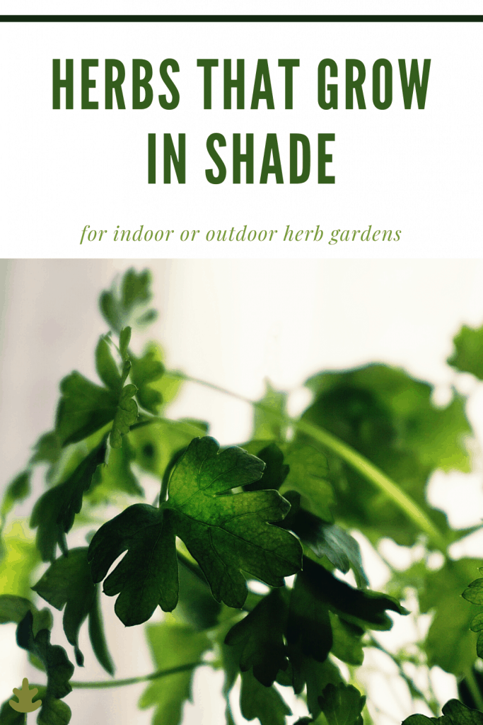herbs that grow in shade