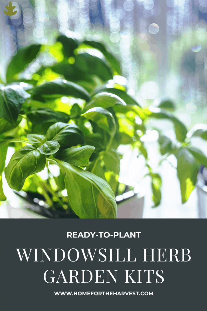 ready-to-plant window herb garden kits