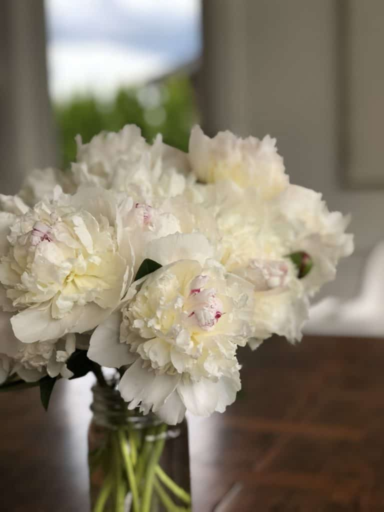 Fresh white peony blooms in glass jar on wood table - festiva maxima peonies
