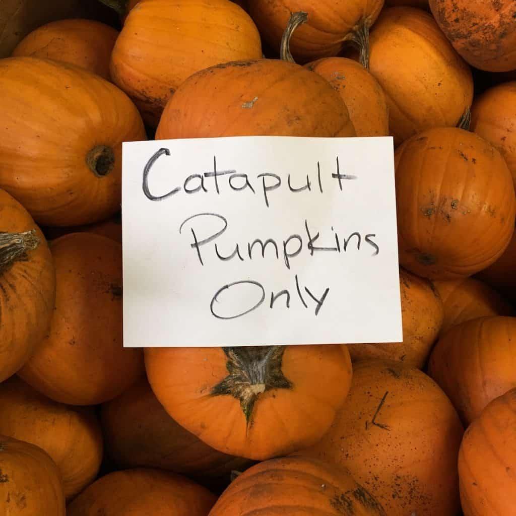 Catapult Pumpkins - Harvest Fest Activity