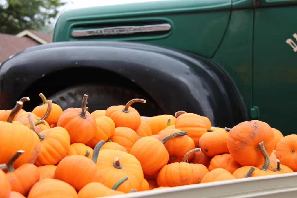 Display of mini orange pumpkins with green antique truck