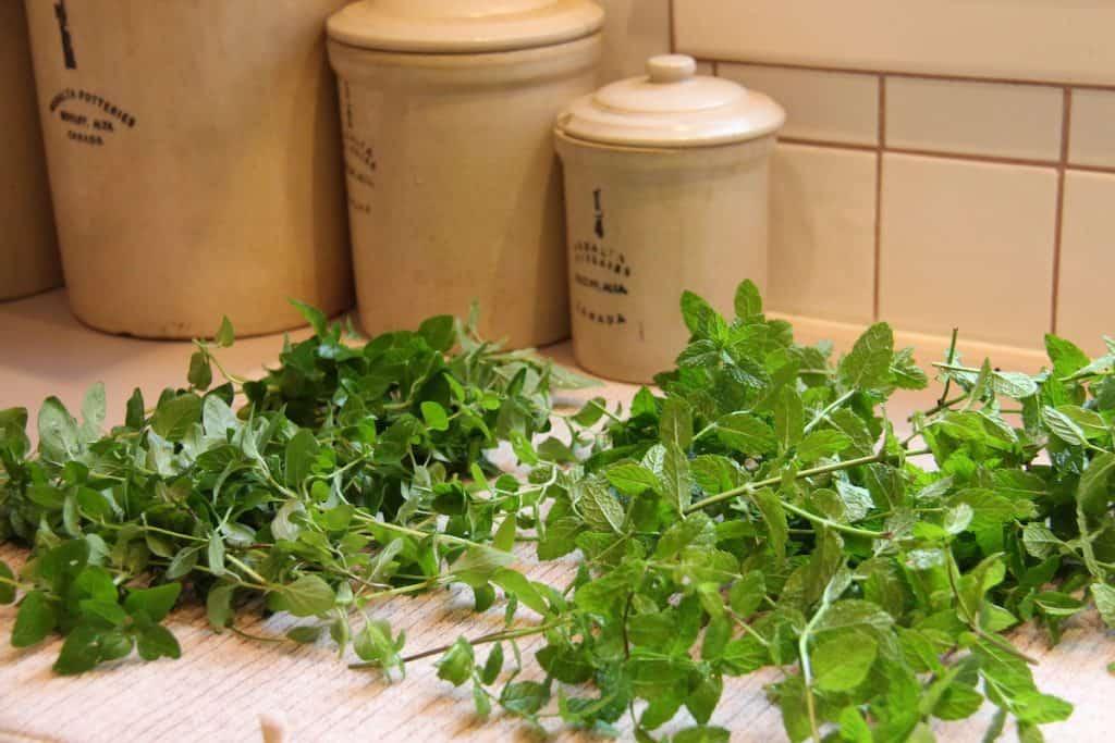 Final fall herb harvest