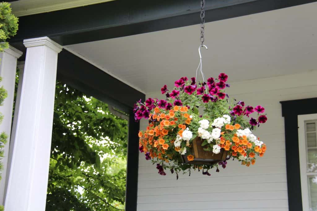 Hanging Basket of Flowers on Front Porch - Gift for Mothers Day