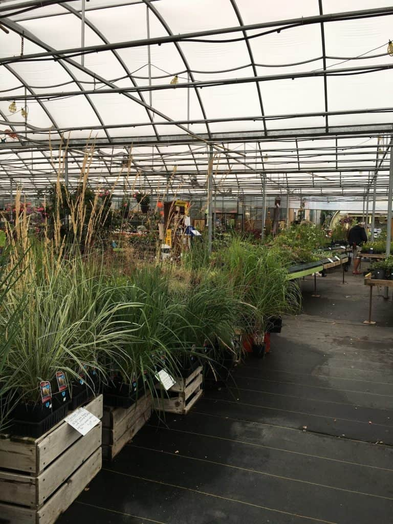 Ornamental Grasses for Planter Pots