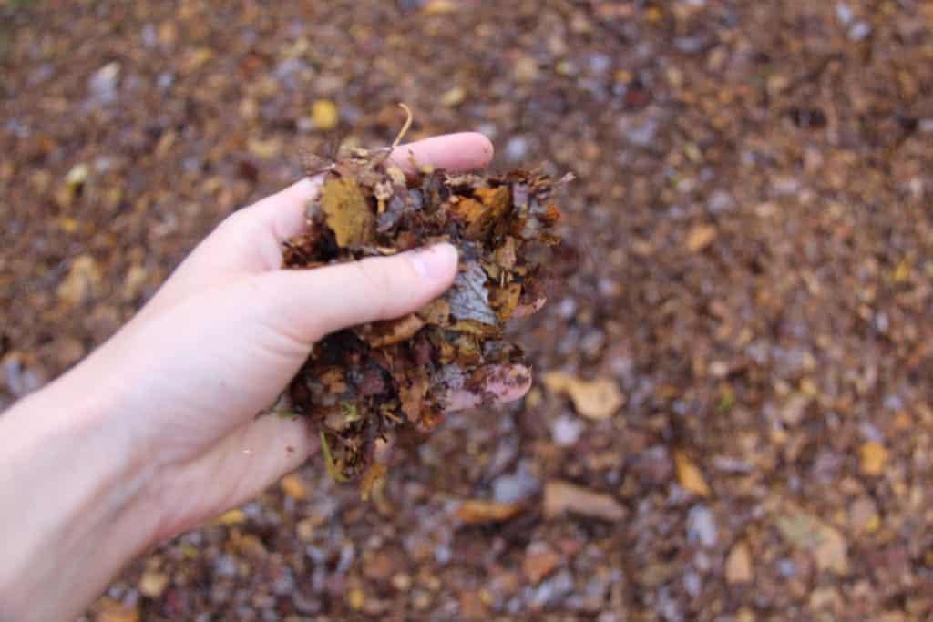 Shredding leaves for fall compost