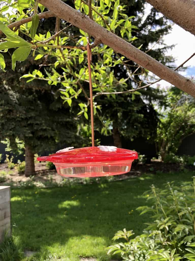 Simple Red Basin Hummingbird Feeder with White Feeding Port Flowers Hanging on Tree in Backyard