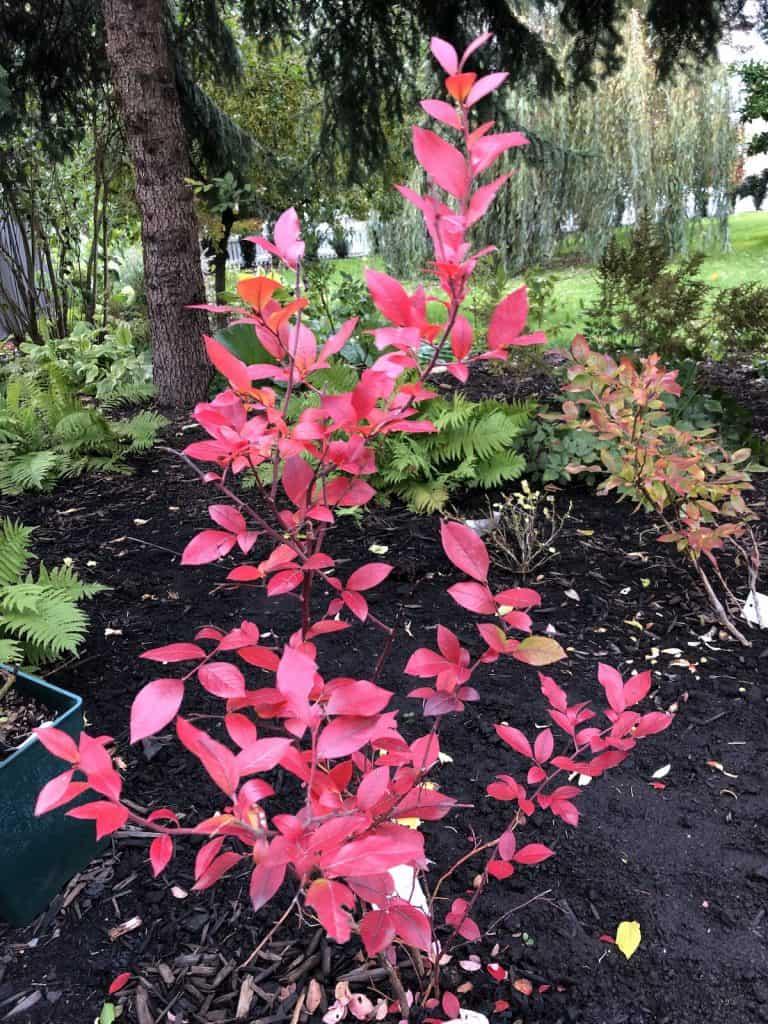 late september in the woodland garden