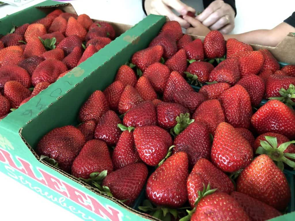 Flat of fresh strawberries during strawberry harvest season