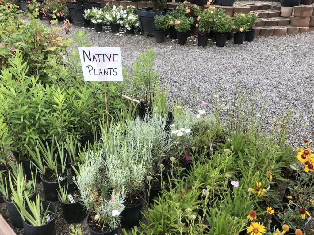 Native Plants at Garden Center for Sale
