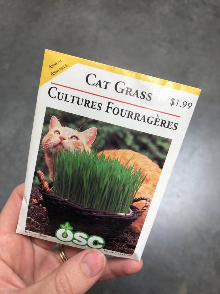 cat grass seeds in package with tabby cat photo - growing catgrass