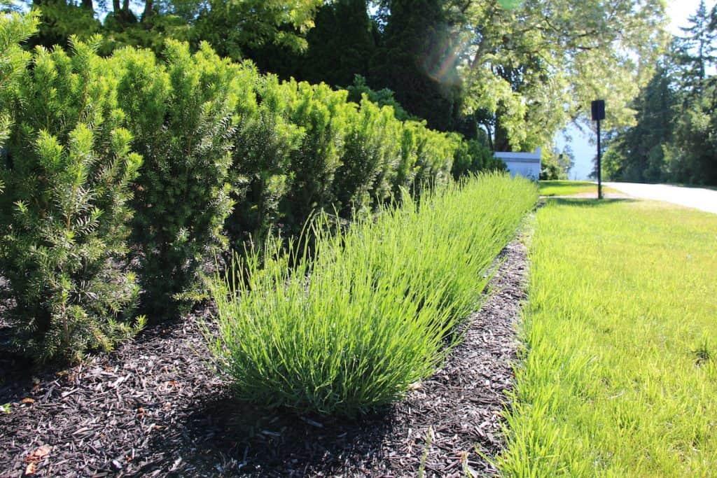 Cut soil edge in front ornamental garden