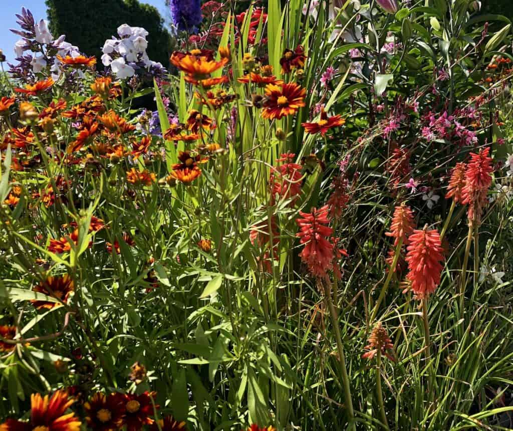 Drought-Tolerant Perennial Flowers
